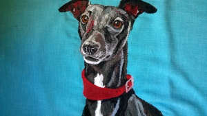 Bobby the Whippet xx